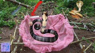 Bẫy Rắn Đơn Giản Khi Sử Dụng Cái TÚI THẦN KỲ Này .Simple DIY Snake Trap That Work 100% .Bẫy Mới Nhất