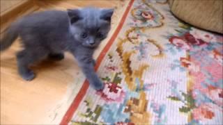 kittens I