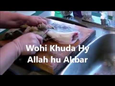 Allah ka Mojza