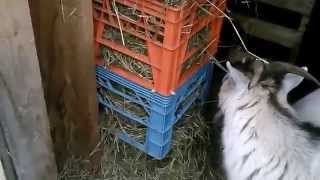 Hay Feeder For Goats