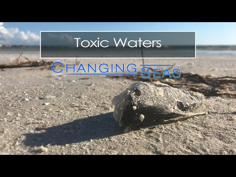 Toxic Waters | Changing Seas