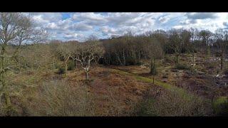 Silveroaks Wood (by drone)