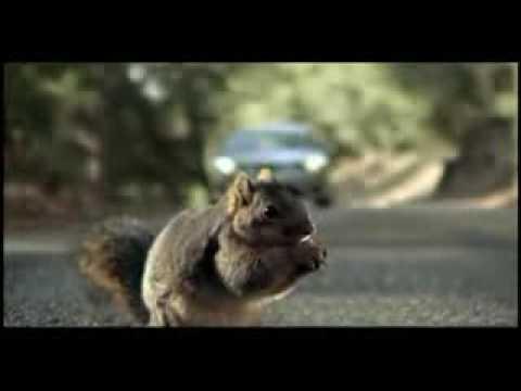 Geico Sign In >> Screaming Squirrel Superbowl Bridgestone Commercial - YouTube