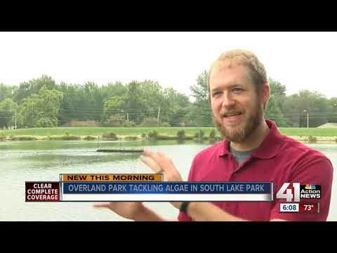Overland Park hopes 'floating wetland' will reduce algae on South Lake