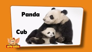flashcards for kids animals and their young ones