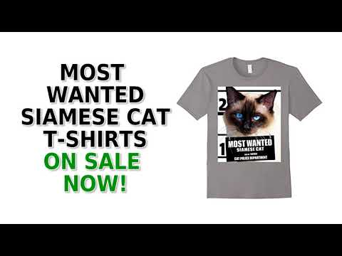 Most Wanted Siamese Cat Cute Funny T-Shirt - Men's, Women's, Kid's - Asphalt, Black, White