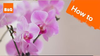 How to Care for your Orchid