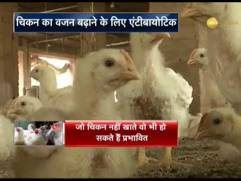 India's farmed chickens dosed with antibiotics, says expert