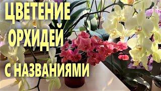 ДВА МЕСЯЦА КАНАЛУ! Дефиле орхидей-участниц ВСЕХ видео   с названиями! Музыка и волшебное цветение!!!