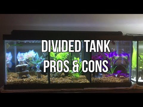 Pros And Cons Of Divided Tanks| AquaticEm