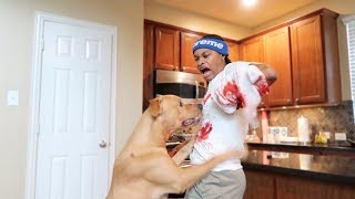 OUR DOG ATTACKED ME PRANK ON GIRLFRIEND!