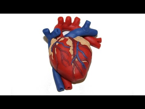 How to Make a Human Heart with Play Doh by Tiger Tomato