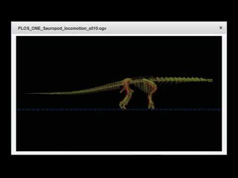 How gigantic dinosaurs walked
