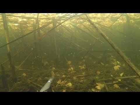 Подводная охота на Рефтинском водохранилище в сентябре