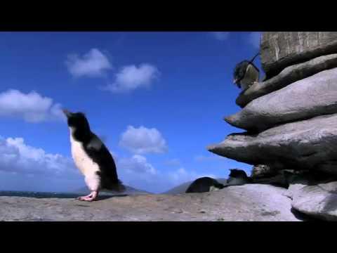 Những cú ngã của chim cánh cụt - huongdan.biz