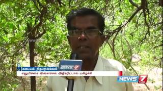 Tirunelveli farmers express happiness over increased lemon cultivation | News7 Tamil
