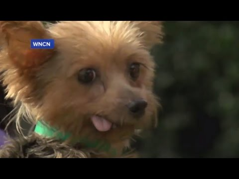 Nearly 130 Puppies, Kittens Rescued From Puppy Mill