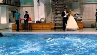 Свадьба и дельфины