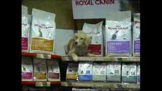 Видео для компании, продающей товары для животных на Кипре