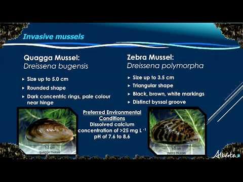 Battling the Threat of Zebra Mussels in Alberta - Farming Smarter