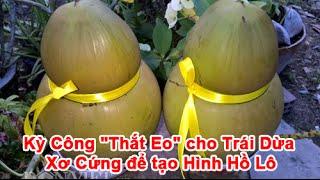 """Kỳ Công """"Thắt Eo"""" cho Trái Dừa Xơ Cứng để tạo Hình Hồ Lô"""