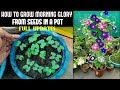 How To Grow Morning Glory From Seed (FULL INFORMATION)
