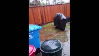 Dog refuses to go potty while it's raining.