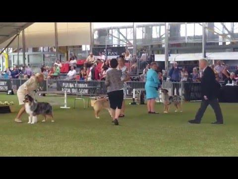 dog challenge
