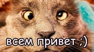 Кот Везде Ходит за Хозяйкой Мне бы такого классного кота ))) [Смешные коты 2019]