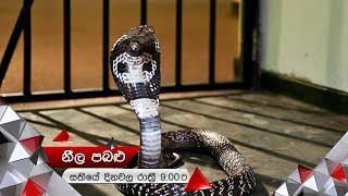 රෙෂිලාටත් නයා දෂ්ට කරයි | Neela Pabalu | Sirasa TV Thumbnail