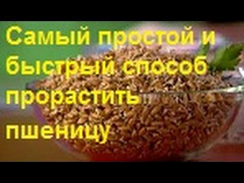 Тыква голосемянная (семена тыквы для проращивания): польза
