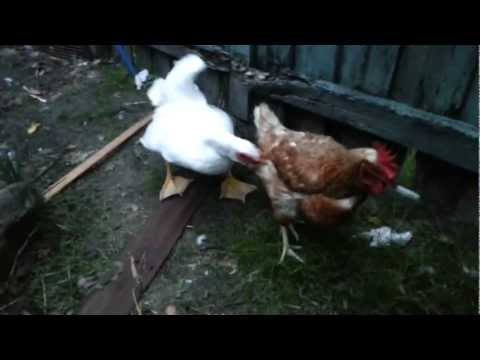 You Been Eating Chicken Wings Wrong Entire Life from YouTube · Duration:  3 minutes 4 seconds