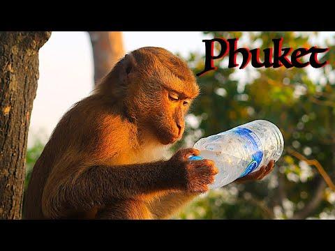 Monkeys In PHUKET!!! | Monkey Hill | Thailand Travel Guide