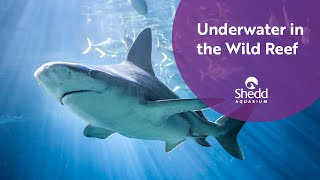 360: Swim with the Sharks at Wild Reef