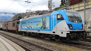 BR 182 mit Reihngold, BR 187 Last Mile | Bunter Verkehr am Lötschberg