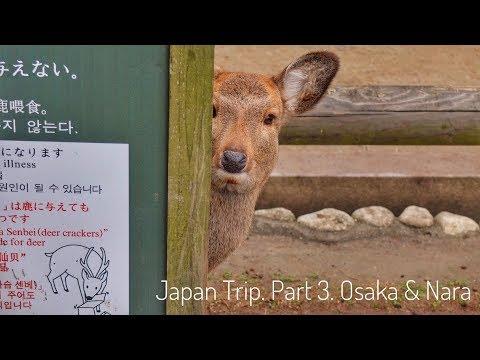 2018. Золотое кольцо Японии самостоятельно. Часть 3. ОСАКА И НАРА (Japan Trip 3. Osaka&Nara