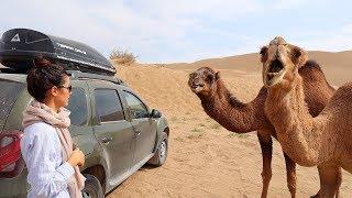 #4 Иран. Нападение верблюдов. Застряли в пустыне. Renault Duster Club