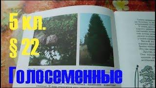 Биология 5 кл § 22 Голосеменные (Автор В.В.Пасечник)