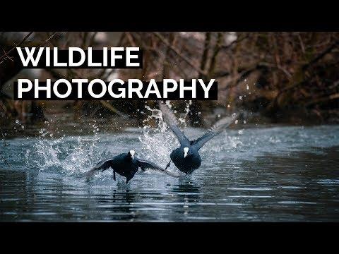 Wildlife Photography | Tutorial Tuesday thumbnail