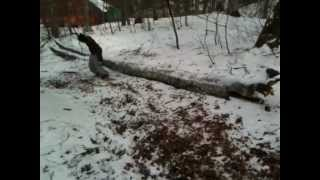 snow iraty horse game.wmv