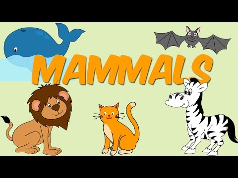 Mammals - Learn About Animals For Kids
