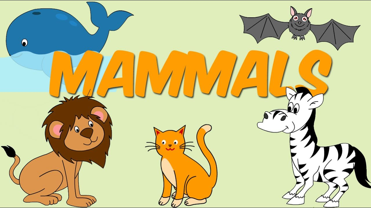 Mammals - Learn About Animals For Kids - YouTube