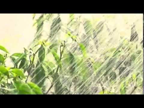 VIETNAM CHILI FARMERS