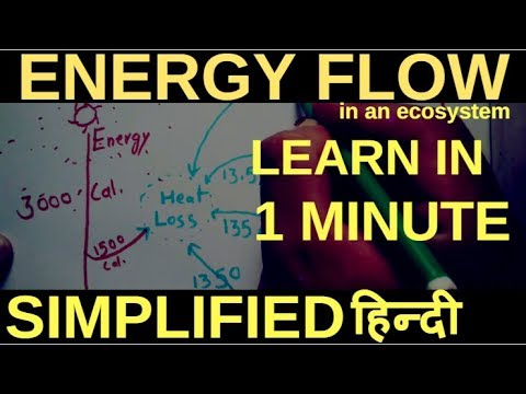 Energy flow in an Ecosystem (Simplified), Hindi