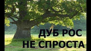 КОГДА ВЫКОПАЛ- БРОСИЛО В ЖАР!!!