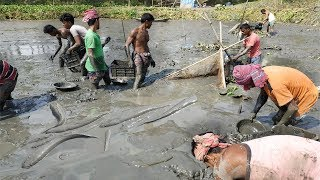 Village Fishing # People lot of Fish Catching in Mud Water by Hand    Asia Fishing Video (Part- 24)