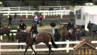 Video of SAY WHEN ridden by CHRISTOPHER PAYNE from ShowNet!