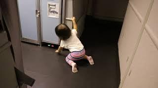 Callie on a plane