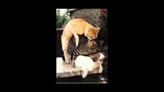 حيوانات تمارس الرذيلة