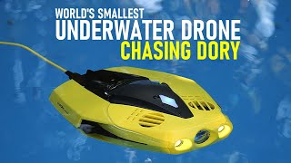 Chasing Dory ROV Review - World's Smallest Underwater Drone | DansTube.TV
